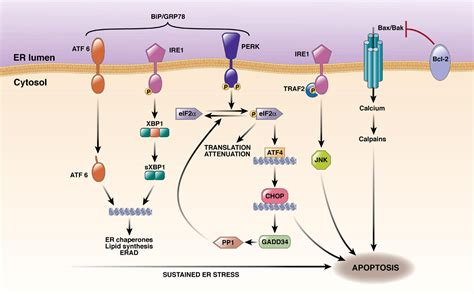 new cellular and molecular mechanisms of lung injury and cellular and molecular mechanisms of liver injury