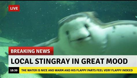 Stingray Meme - local stingray is in a great mood boing boing