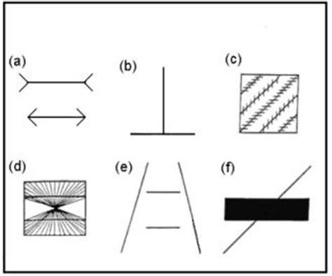 imagenes sensoriales visuales forma y tamaño 1 11 algunas caracter 237 sticas de la respuesta perceptiva