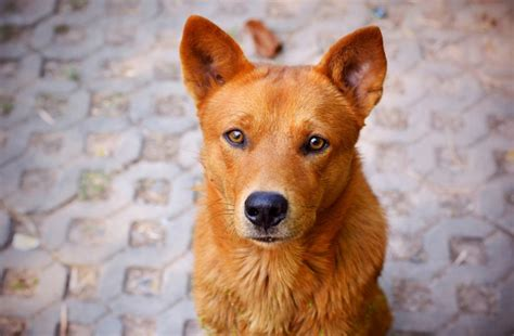 Jaundice in dogs and cats   yellow skin, gums, and eyes
