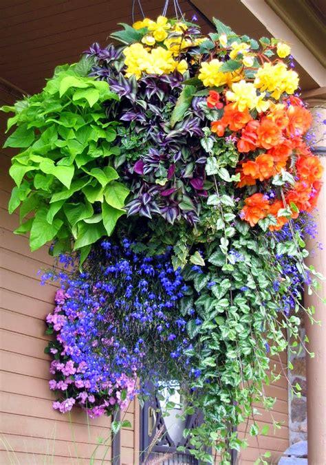 hanging flower basket inspiration daily appetite