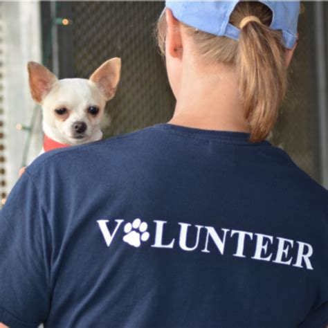 houston puppy adoption giving houston humane society pet rescue pet adoption autos post