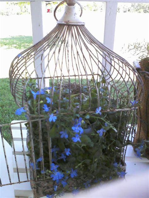 flowers in a bird cage store design pinterest