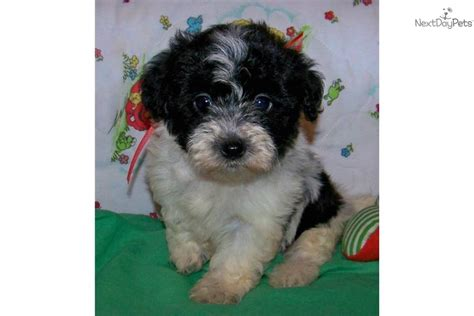 puppies for sale illinois misties boxer barn southern illinois boxer puppies for