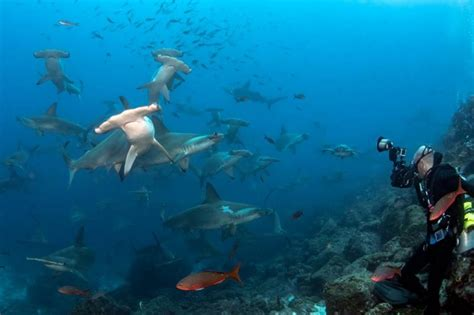 galapagos dive what you need to to scuba dive in the galapagos