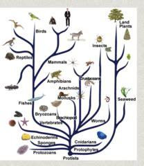 Evolution Evolution Quizlet Biology