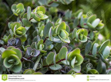 green plants stock photo image 41990937