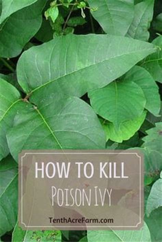 1000 ideas about kill poison ivy on pinterest poison ivy plants ivy plants and poison ivy killer