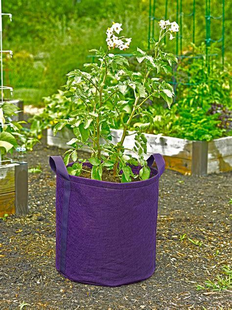 gardeners  potato grow bag holds  quarts  soil