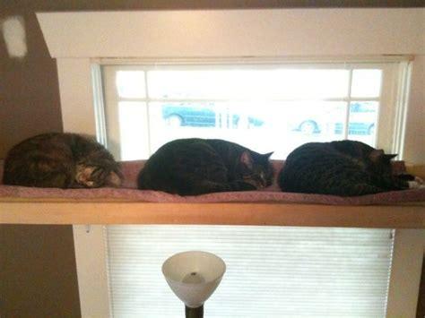 Window Shelf For Cat by Cat Shelf Or Window Sill Sitter Cut Aluminum