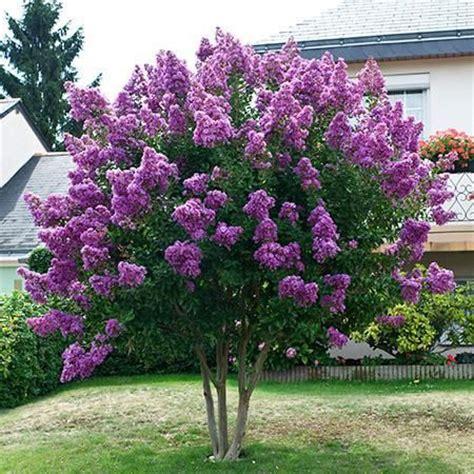 10 best ideas about drought tolerant trees on pinterest drought resistant landscaping purple