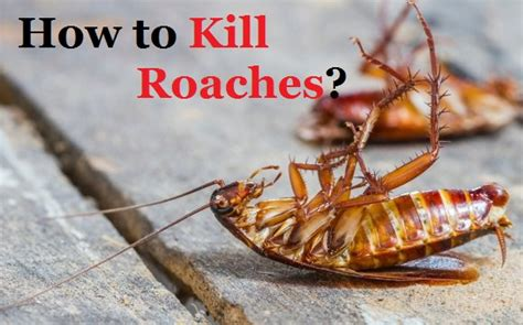 how to kill roaches fast