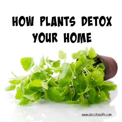Plantlife Detox by How Plants Detox Your Home