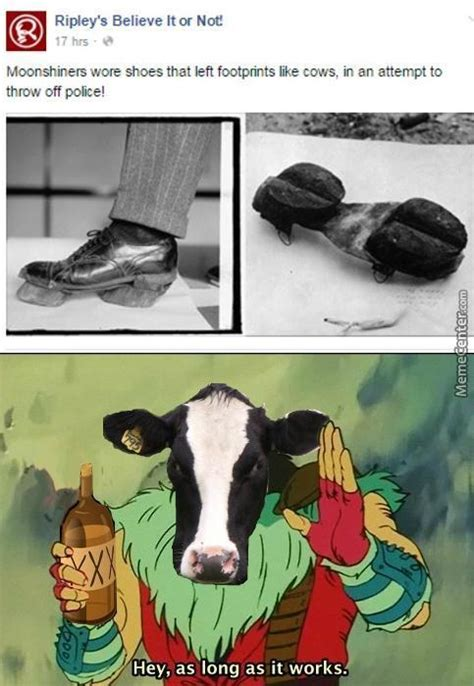 Moo Meme - moo cow memes best collection of funny moo cow pictures