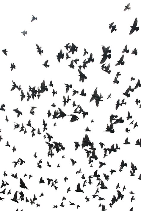 black and white bird pattern black and white cool birds bird transparent transparent