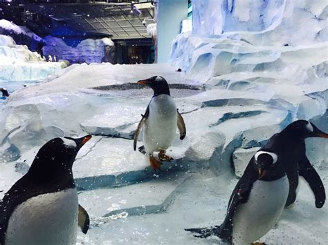 another country penguin modern b002ri9cxy 1st look inside detroit zoo s new penguinarium wzzm13 com