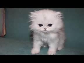 Our new kitten cloud popfilm