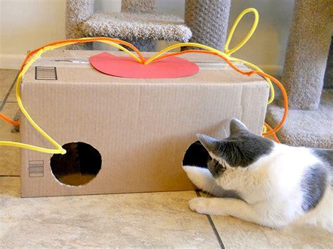 giochi si possono fare in casa giochini faidate per gatti idee