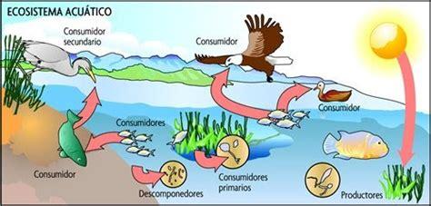 clases de cadenas alimenticias acuaticas conozcamos m 225 s sobre los ecosistemas relaciones en un