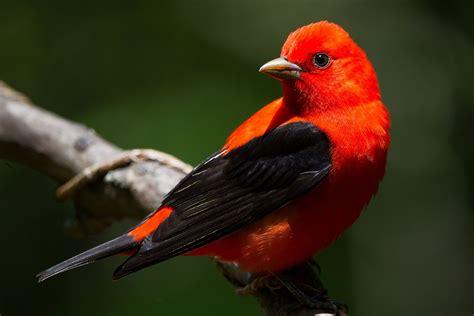 guide  passerine birds   traits
