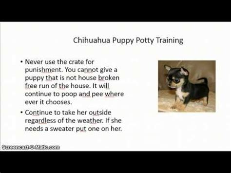 how do you potty a puppy how do you indoor potty a chihuahua puppy free mini course
