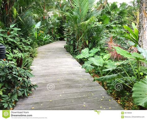 Boardwalk Wooden Walkway Path Surrounded With Green Plants In Singapore Botanic Gardens