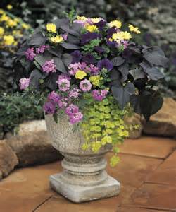 container garden design foliage and texture proven winners