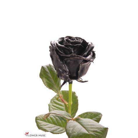 black wax roses black roses flower muse