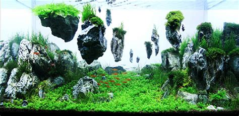 Aquascaping Techniques by Aquascaping Les Plus Beaux Aquariums