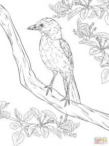 coloring pages birds realistic realistic florida scrub jay coloring page free printable