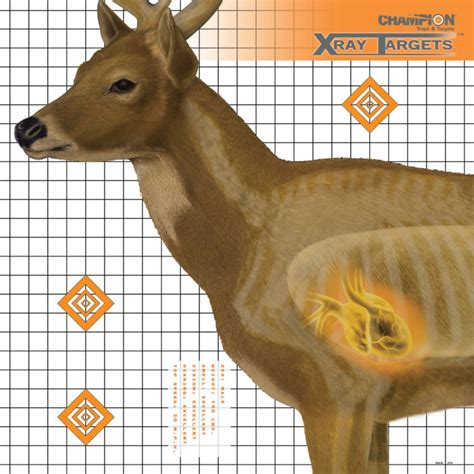 free printable deer targets for shooting chion 6 pk deer x ray paper targets by chion at