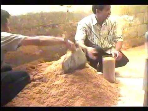 Bibit Awal Jamur Tiram cara budidaya jamur tiram sebagai usaha rumahan doovi