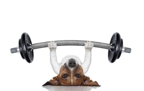 do dogs remember their puppies exercise exercising your indoors
