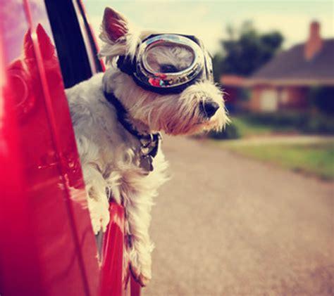 Hund Im Auto Transportieren by Mit Dem Hund Im Auto Unterwegs Tipps Hunde Fan De