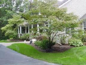 landscape trees and shrubs newsonair org