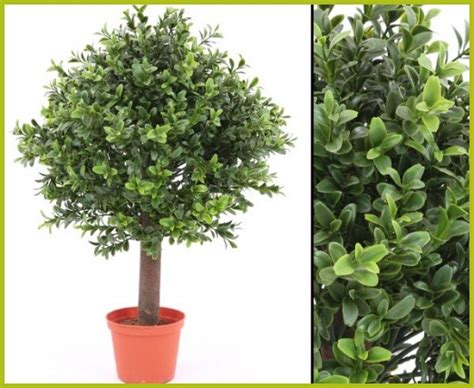 kunstpflanzen wetterfest wetterfeste pflanzen kaufen wetterfeste pflanzen f 252 r drau 223 en