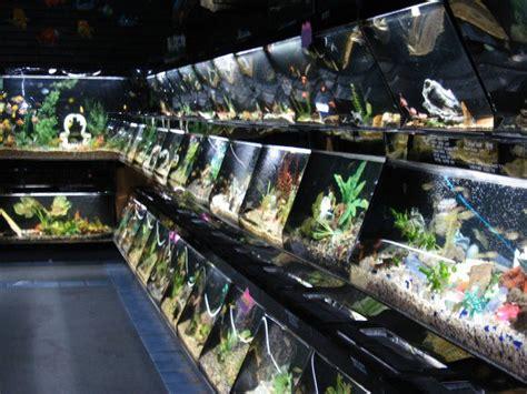 aquarium design san diego 17 best images about aquariums fish on pinterest