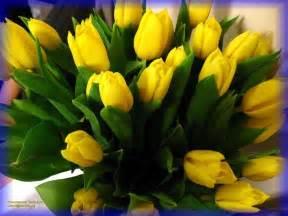 tulips flowers photo 22284187 fanpop