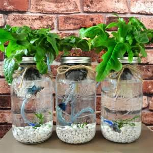 Indoor Hydroponic Herb Garden - mason jar aquaponics green plur