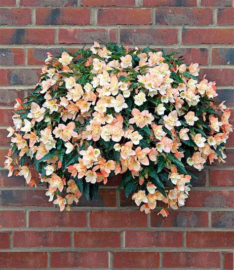 ösenvorhänge Kaufen by Pflanzen Shop Farn Mix 3 Pflanzen Outdoor Kaufen