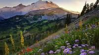 منظره زیبای بهار در کوهستان دانلود 1984