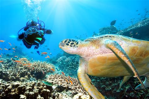 dive destinations 5 must dive destinations for 2016