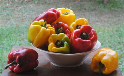 come coltivare i peperoni in vaso coltivare il peperone in vaso orto come coltivare il