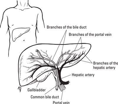 Liver Detox And Celia by 17 Best Images About Health On Sinus Infection