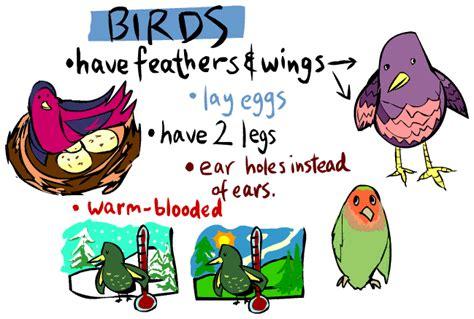 kid s corner bird page