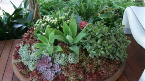 best plants the best potted plants for full sun part sun and shade
