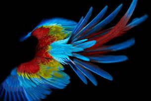 bird with colorful feathers strange birds fowl and feathers colorful parrot