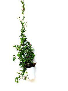 Zimmerpflanzen Dunkle Standorte by Welche Zimmerpflanzen Brauchen Wenig Licht Dunkle R 228 Ume