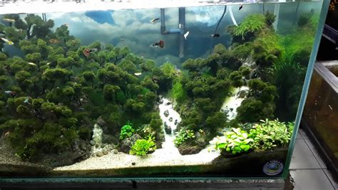 aquascape aquarium besar aquascape ideas