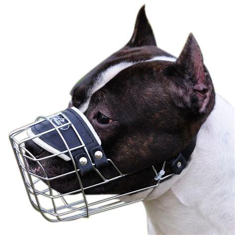 muzzle for pitbull pitbull muzzle